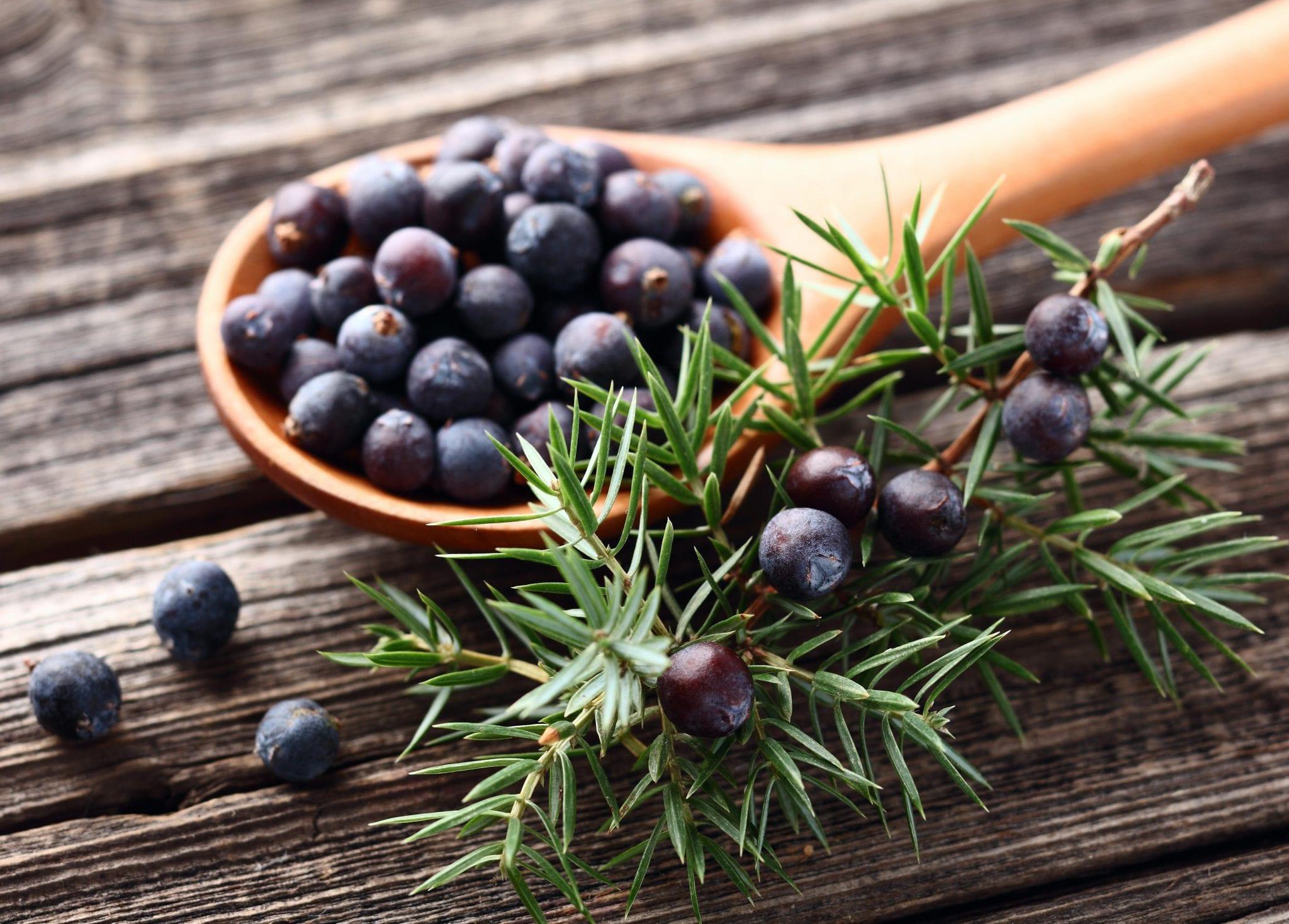 Substitute for Juniper Berries