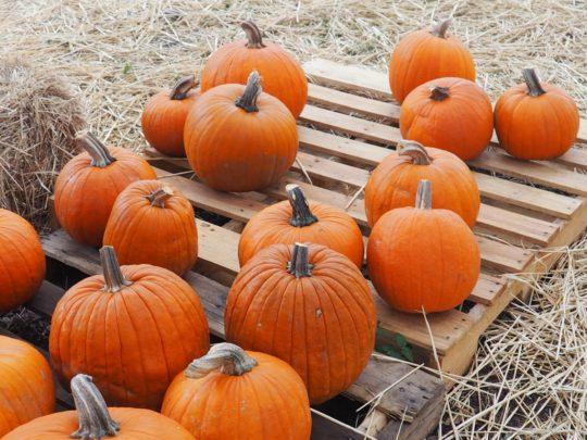 Substitute for Pumpkin Puree