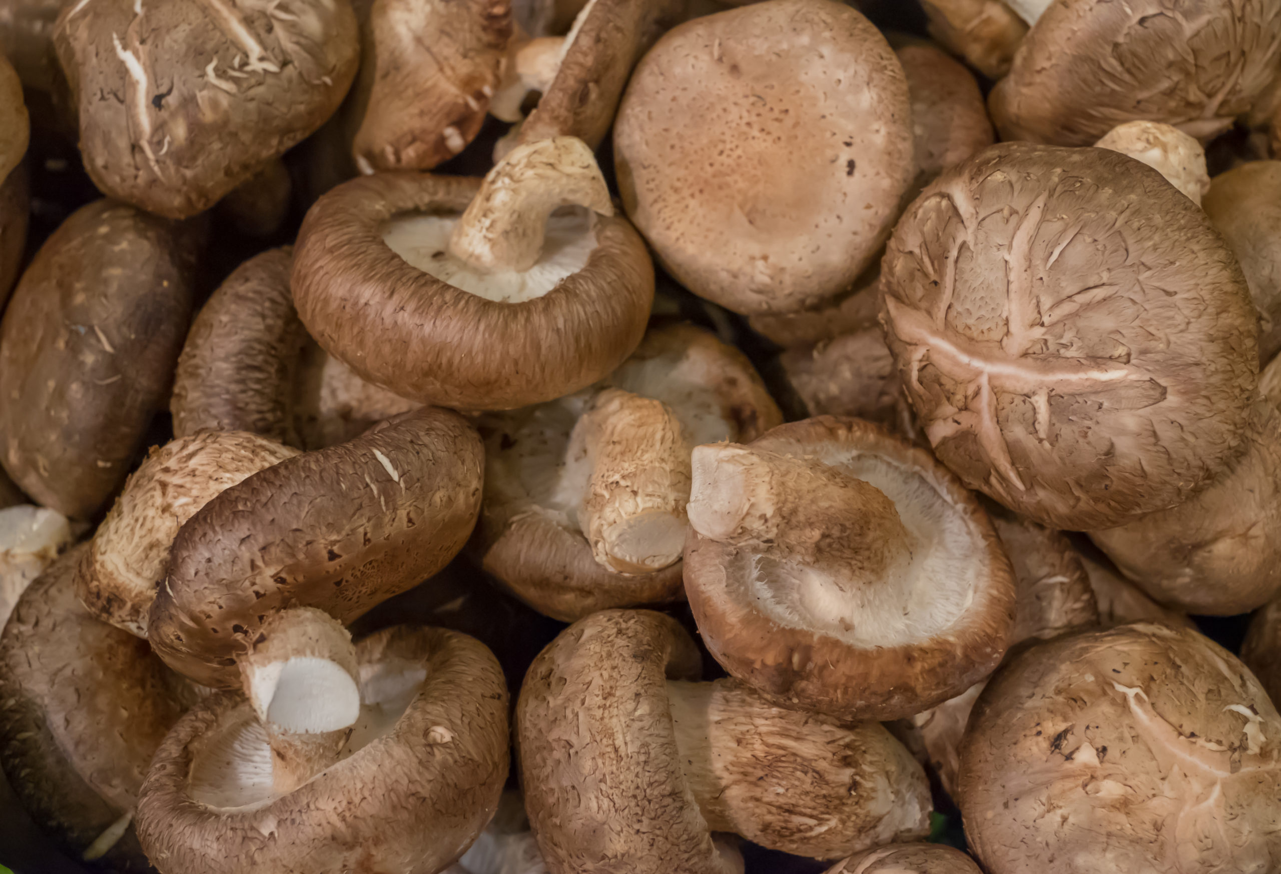Shiitake Mushroom Substitute