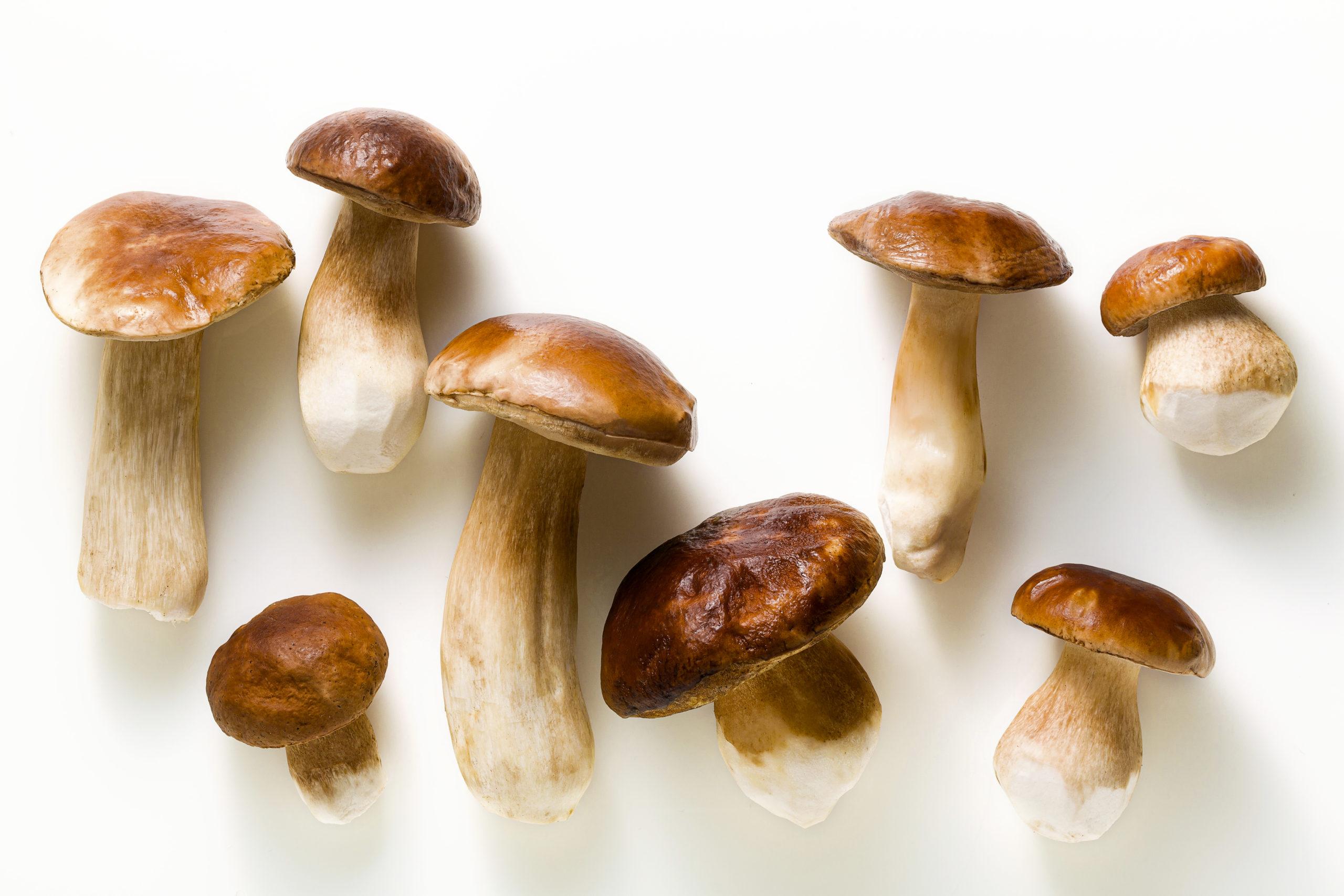 Substitute for Porcini Mushrooms